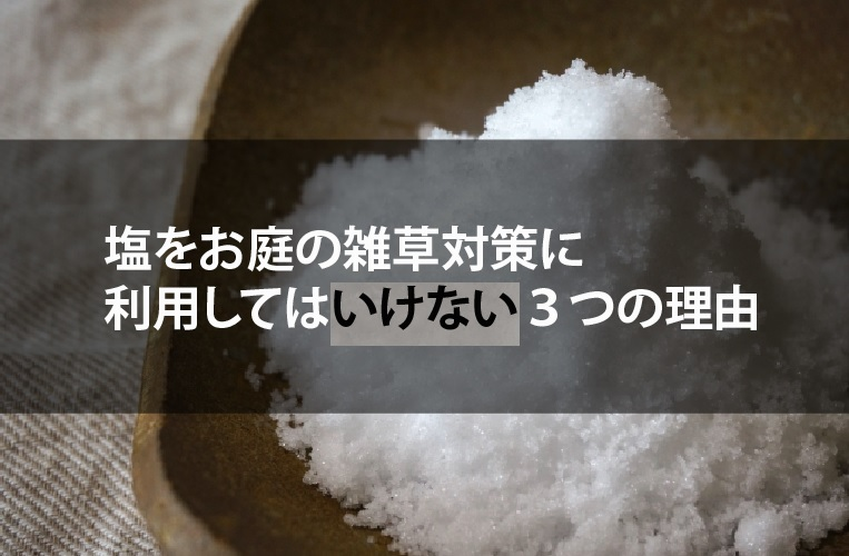庭雑草対策塩使用